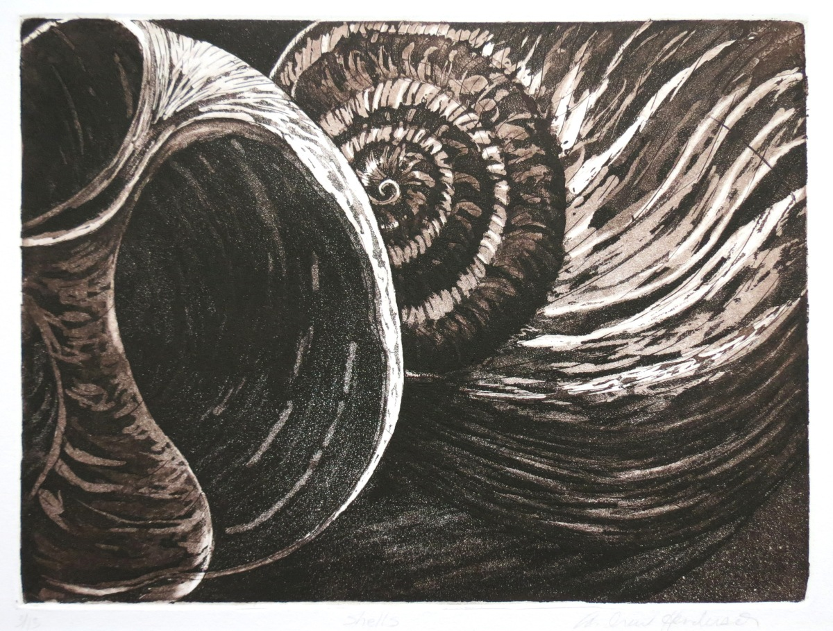 Shells etching Andrew Henderson