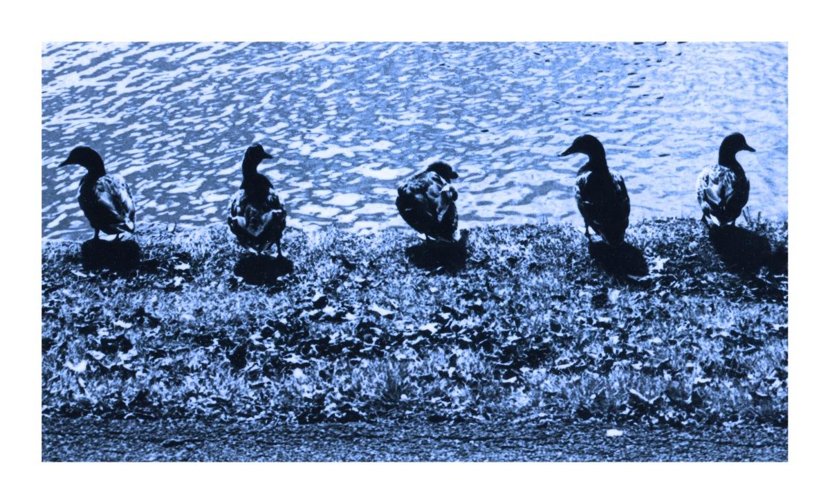 Ducks in a Row Andrew Henderson