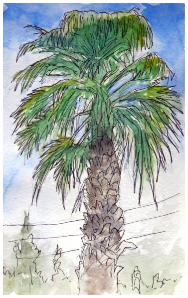 Palm Tree watercolour Andrew Henderson
