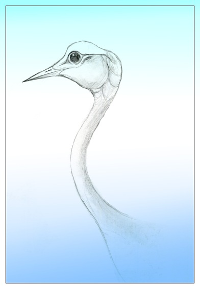 Crane sketch Andrew Henderson
